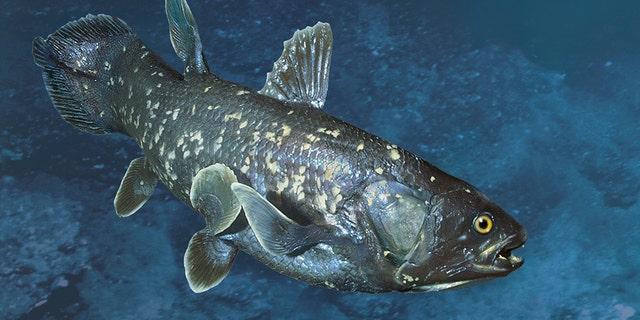 تصور می شود ماهی های کمیاب ماقبل تاریخ که پیش از این منقرض می شدند ، حلقه مفقوده ماهی و تتراپودها هستند.