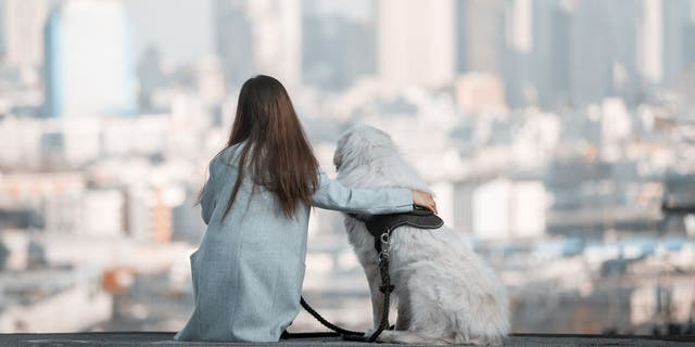 Some city slickers like dogs more than others, according to Zillow and Rover.com's joint survey. (iStock)