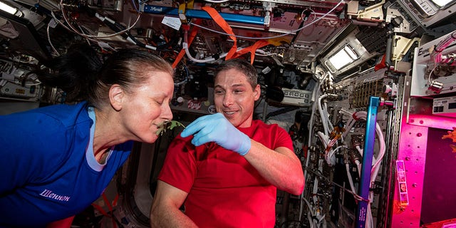 NASA astronauts Shannon Walker and Michael Hopkins collect leaf samples from plants growing inside the European Columbus laboratory on January 28, 2021. Space agriculture is key to the success and sustainability of future human missions to the Moon, Mars and beyond.