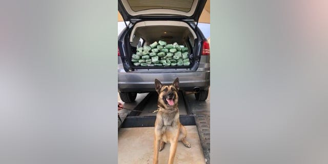 The nose always knows! A Border Patrol K-9 detection team found 67lbs of meth inside of a vehicle at an immigration checkpoint on Saturday morning.