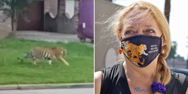 Carole Baskin offering $5,000 reward for info leading to missing tiger in Texas.jpg