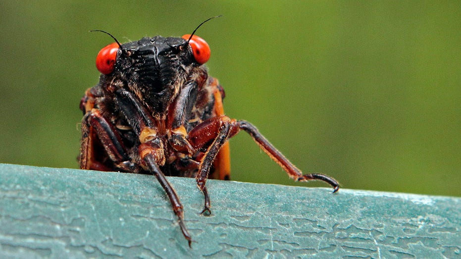 Georgia county urges residents to stop calling 911 over cicadas