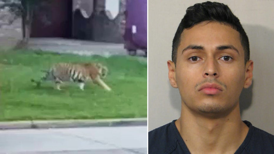 Tiger let loose in Houston neighborhood remains at large: reports