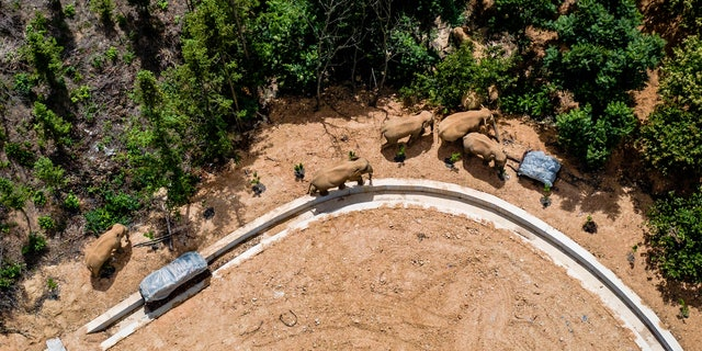 In this aerial photo taken on May 28, 2021 and released by China's Xinhua News Agency, a herd of wild Asian elephants walks in E'shan County, southwestern Yunnan Province. China).  A herd of 15 wild elephants that walked 500 kilometers (300 miles) from a nature reserve in China's southwest mountains approached the large city of Kunming on Wednesday, June 2, as authorities rushed to try to keep them away from populated areas.  (Hu Chao / Xinhua via AP, file)