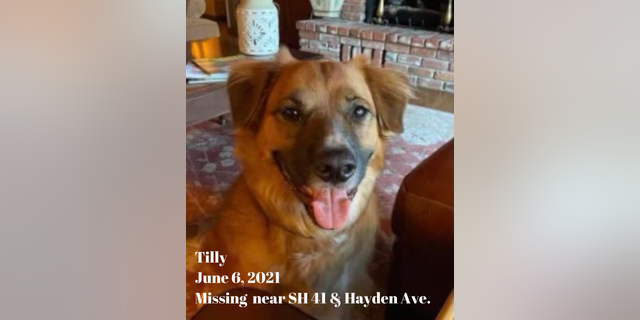 """Tilly, a 2-year-old border collie heeler, went missing June when a vehicle collision """"ejected"""" the pooch from the rear seat of his family's car on Idaho State Highway 41, a press release from the Idaho State Police states. The dog was returned to his family two days later. (Idaho State Police)"""