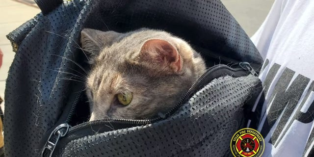 The cat safely returned to the ground, after it was seemingly carried out of the tree in a backpack.