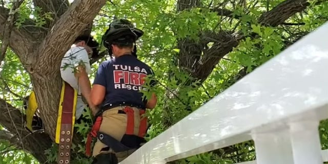 According to the Tulsa Fire Department, a cat owner had become stuck in a tree while trying to rescue their pet.