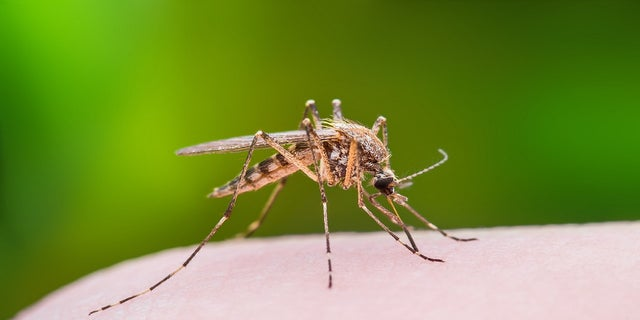 At least eight state health departments have cautioned residents over West Nile virus risk in the last week amid a seasonal peak and cases reported in humans and animals, on the rare occasion resulting in death.
