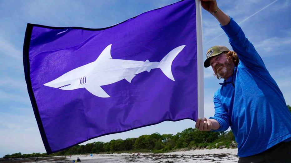 Maine beaches to hoist shark warning flags commonly used in Massachusetts