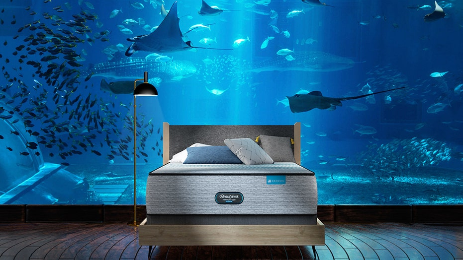Long Island Aquarium offers overnight stay with shark dive, champagne dinner