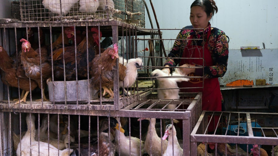 China confirms first human case of H10N3 bird flu: report