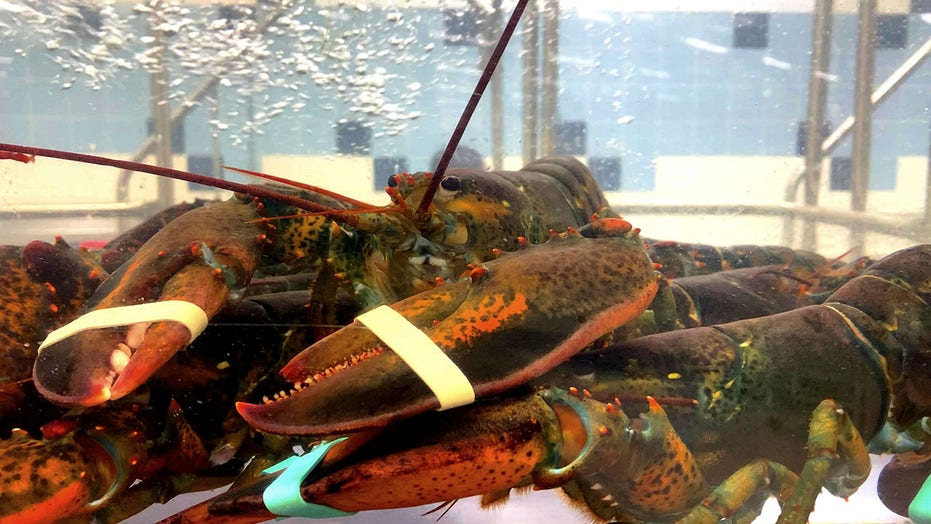 Man accused of suffocating $10k worth of lobsters at Cape Cod seafood market