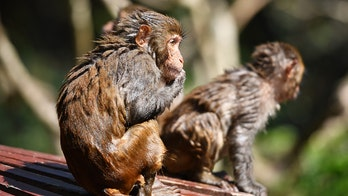 China reports first human case of Monkey B virus after veterinarian's death