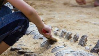 103-million-year-old dinosaur fossil found in Oregon