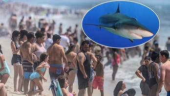 More New York shark sightings close beaches again