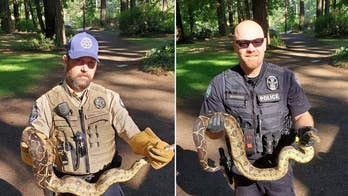 Washington authorities find 8 pythons in park prompting city to plead: 'Do not release pets into the wild!'