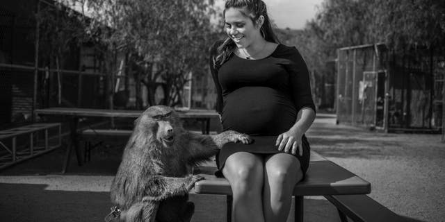 Colleen Wilson shared the spotlight with Chrissy the Baboon, a retired movie animal, during her maternity shoot at Animal Tracks, Inc. (Christine Hilberg)