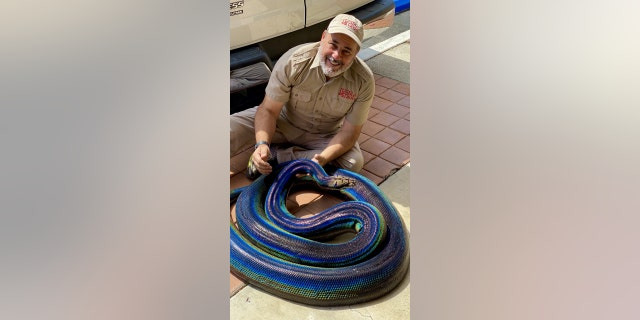 """Jay Brewer, the founder of The Reptile Zoo, told Fox News that MyLove is a """"super, super sweet snake."""""""