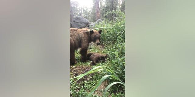 Sad bear mom