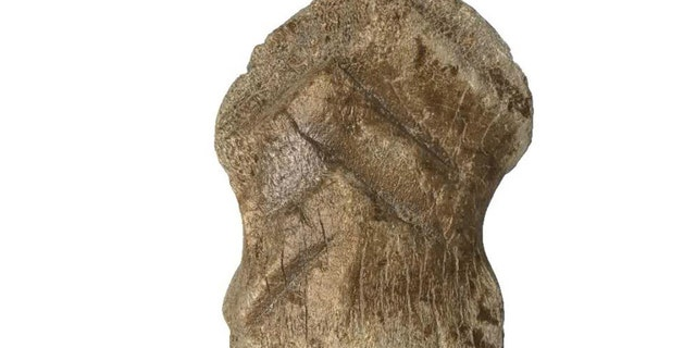 Prehistoric deer bone believed to be among world's oldest pieces of art