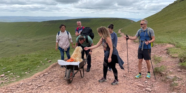Ten-year-old Monty, a labradoodle, enjoyed exploring hills and walks across the country with his owner, Carlos Fresco.