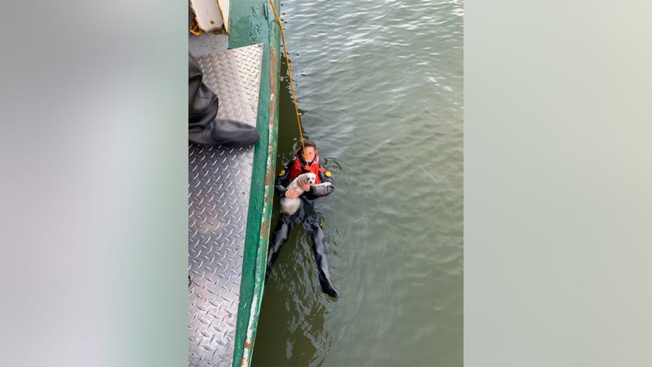 Dog owner needs to be rescued after jumping into Hudson River to rescue beloved pet