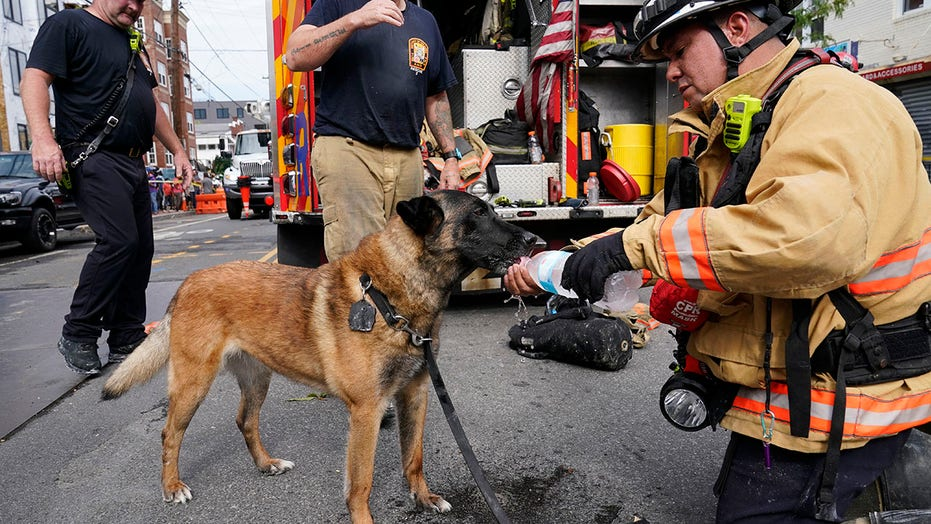 DC rescue dog who found trapped worker after building collapse is hailed a hero