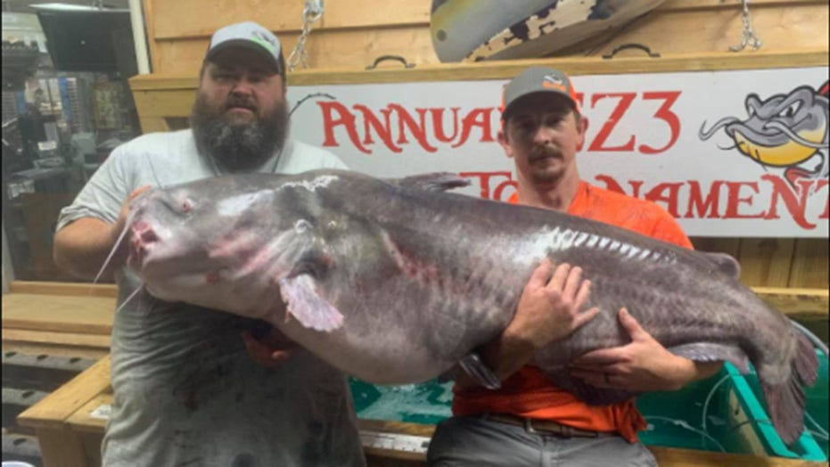 Record-breaking fish caught in North Carolina: 'Looked like a whale in the back of the boat'