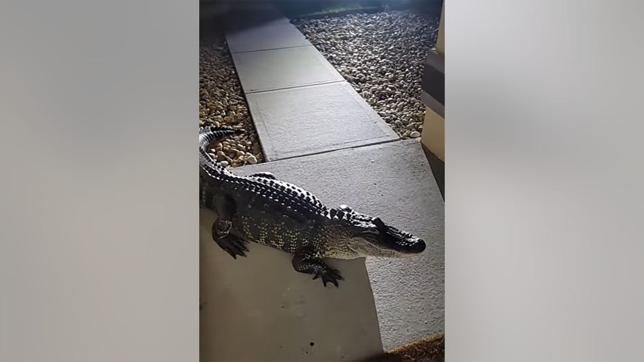 Gator surprises family in the middle of the night, damages house