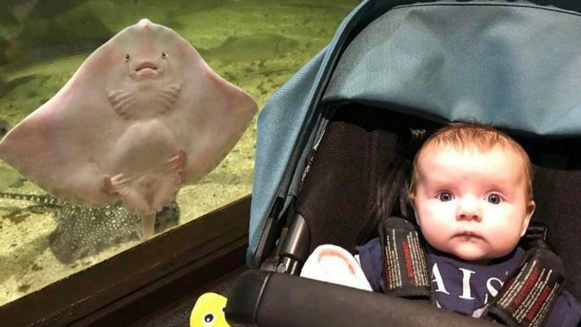 Mama v akváriu zbadala medzi dcérou a rejnokom neuveriteľnú podobu.