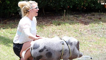 Britney Spears happily pets potbellied pig in Hawaii with boyfriend Sam Asghari amid conservatorship battle