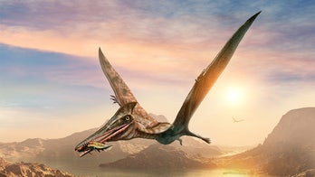 Australian researchers discover country's largest flying reptile