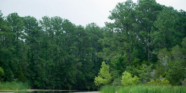 Bastrop State Parkin Bastrop, Texas. (Visit Bastrop).