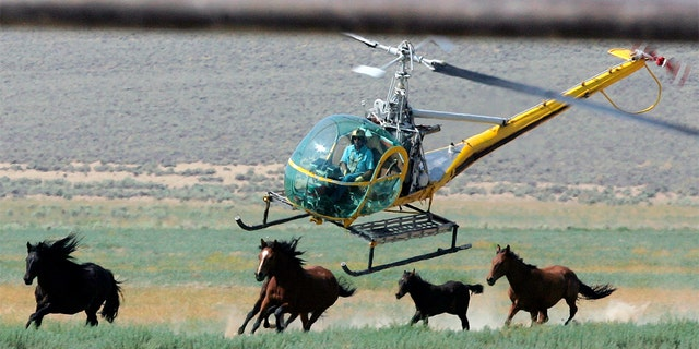 U.S. land managers have begun efforts to capture about 50% more wild horses than originally planned this year because of severe drought across the U.S. West.
