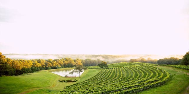 Grab an Uber, Lyft, or designated driver and tackle the 39-mile <u>wine trail</u> and sip at some of the best vineyards and wineries Northern Georgia has to offer.