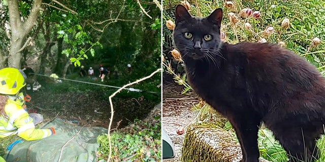 Rescuers lift an elderly woman, 83, out of a ravine on a stretcher in the United Kingdom after her pet cat helped them find her. Police called her cat, Piran, a