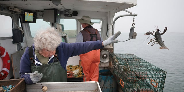 Lobsterwoman Virginia Oliver, 101, tosses back an undersized lobster. (Photo by Jessica Rinaldi/The Boston Globe via Getty Images)