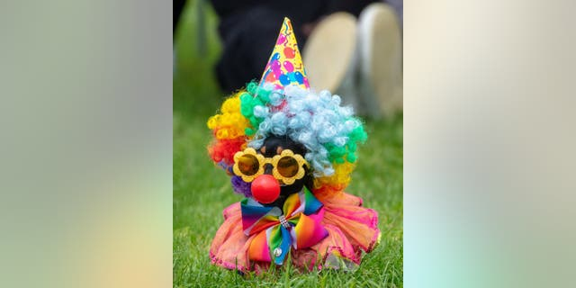 Clown costumes are a fun way to bring out your pet's silly side.