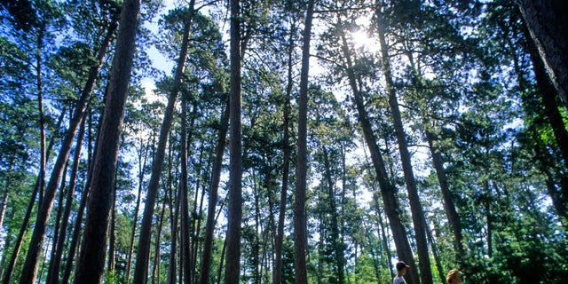 Hiking in Itasca State Park (Explore Minnesota).
