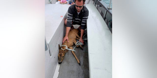 Mark Bowditch found the deer swimming in waters that were over 150-feet-deep.