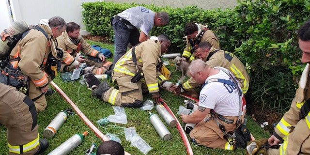 Firefighters cared for the dogs following their rescue.