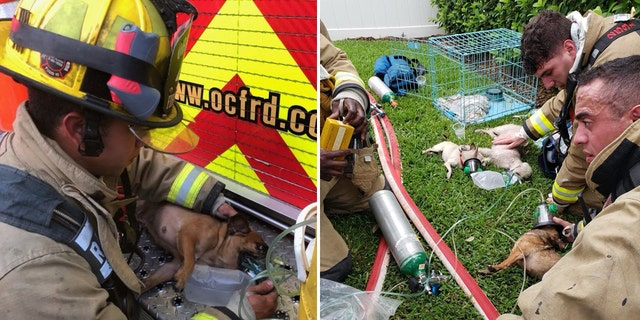 Firefighters gave oxygen to the rescued dogs after evacuating them from the burning home.