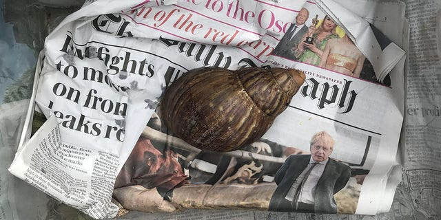 The snail was discovered at a DPD center in England.
