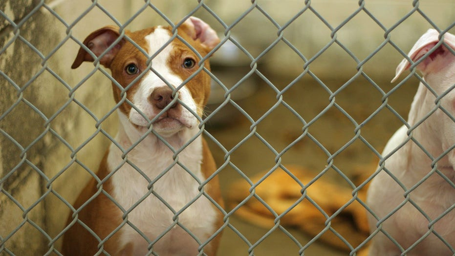 Australian rescue dogs shot over COVID restrictions: report