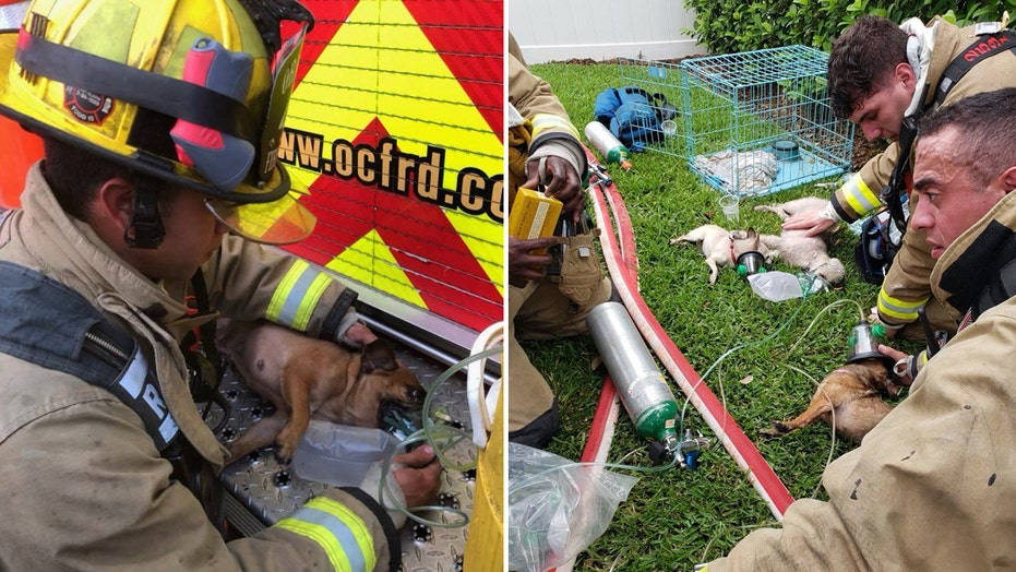Florida firefighters rescue 7 dogs from burning home, 2 canines in critical condition: fire officials