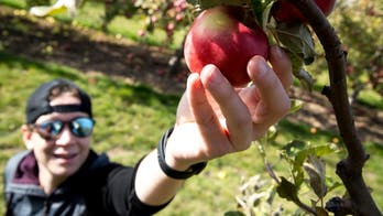 Head to these orchards to go apple picking this fall