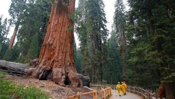 California wildfires threaten giant sequoias