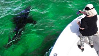 Shark tourism benefits Cape Cod community