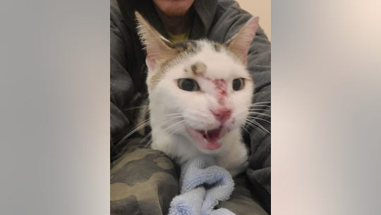Lost cat lives on JFK airport runway for over two weeks before getting rescued