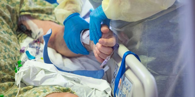 A nurse holds the hand of a COVID-19 patient in the Medical Intensive care unit (MICU) 세인트에서. Luke's Boise Medical Center in Boise, 아이다 호, 화요일에, 8월. 31, 2021. More then half of the patients in the ICU are COVID-19 positive, none of whom are vaccinated. (AP Photo/Kyle Green)